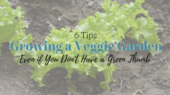 [VIDEO] How to Grow a Vegetable Garden