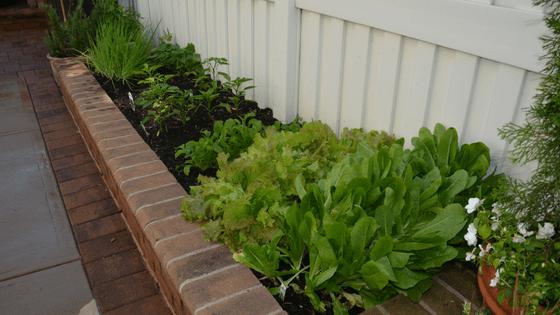 growing vegetable garden