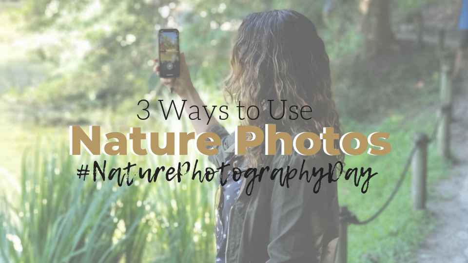 Nature Photography Day: How Incorporate These Images in Your Decor